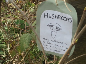 Mushroom drawing and label on a board in amongst greenery
